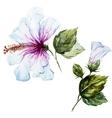 Watercolor hibiscus flower vector image vector image