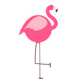 thick flamingo on white background vector image vector image