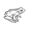 frog animal sketch engraving vector image vector image