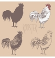 Profile of cock sketch vector image