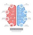 brain infographic conceptual thinking learning vector image