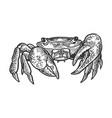 crab animal engraving vector image vector image