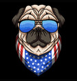 pug dog eyeglasses vector image