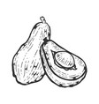 avocado sketch engraving vector image vector image