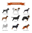 Dog breeds set isolated on white background