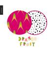 food patterns fruit dragonfruit vector image vector image