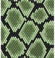 Green seamless snake skin pattern vector image