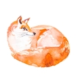 Fox isolated on white background Watercolor vector image vector image