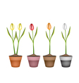 Fresh Tulip Flowers in Four Ceramic Pots vector image vector image