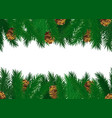 pine tree cones on green spruce branches vector image