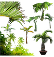 set of different palm trees vector image