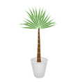 A Palm Treesin Flower Pot vector image vector image