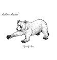 autumn animal hand drawn of grizzly bear vector image vector image