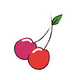 cherry fruit food vector image vector image