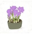 crocus spring flowers vector image vector image