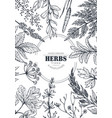 frame with herb and wildflower elements vector image vector image