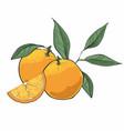 orange fruit isolated on a white background vector image vector image