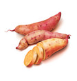 realistic sweet potato set on a white background vector image vector image