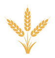 wheat or rye ears with grains vector image