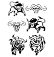 Black and white bulls or buffaloes vector image
