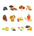 Different nuts set vector image