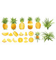 pineapple fruit tropical collection colorful vector image