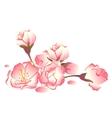 Sakura flowers Pink cherry buds vector image