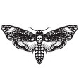 skull moth butterfly death head hawk moth vector image vector image