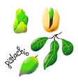 bright cartoon pistachio vector image vector image