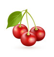 cherry realistic icon isolated on white vector image vector image
