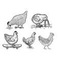 chicken set line art sketch vector image vector image