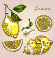 collection of highly detailed hand drawn lemon vector image vector image