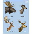 moose or eurasian elk tufted deer roe or doe vector image vector image