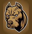 pitbull head vector image vector image