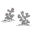 prickly pear sketch prickly pear cactus with ripe vector image vector image