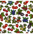 set colorful berries vector image