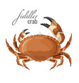 fiddler crab nature marine animal with claws vector image vector image