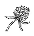 flower isolated freehand pencil drawing vector image vector image