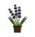 lavender flowers icon image vector image vector image