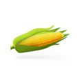 one ear of sweet corn isolated on white vector image