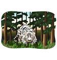White tiger vector image