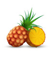 whole pineapple with half sliced piece of ananas vector image vector image