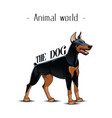 animal world the dog doberman background im vector image