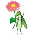 green bug holding pink flower on white background vector image vector image