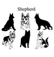 shepherd set collection pedigree dogs black vector image