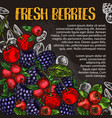 berry and fruit chalk sketch poster on blackboard vector image vector image
