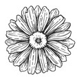 flower isolated freehand pencil drawing vector image
