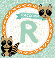 ABC animals R is raccoon Childrens english vector image