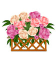flowering peonies behind a wooden lattice fence vector image