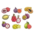 Hand drawn tropical and exotic fruits vector image vector image